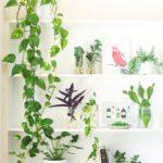 désencombrement nature végétal home plantes naturel zen