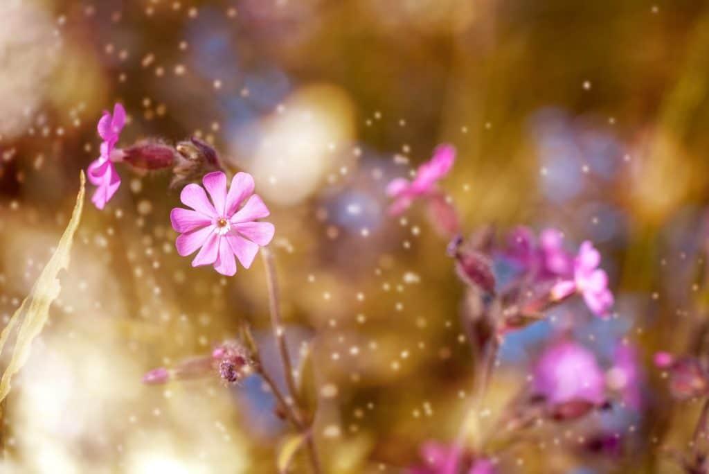 désencombrement, fleurs nature décoration rangement deuil