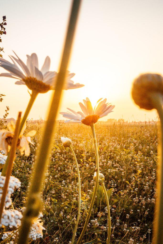 fleurs minimalistes zen épuré mode de vie coaching